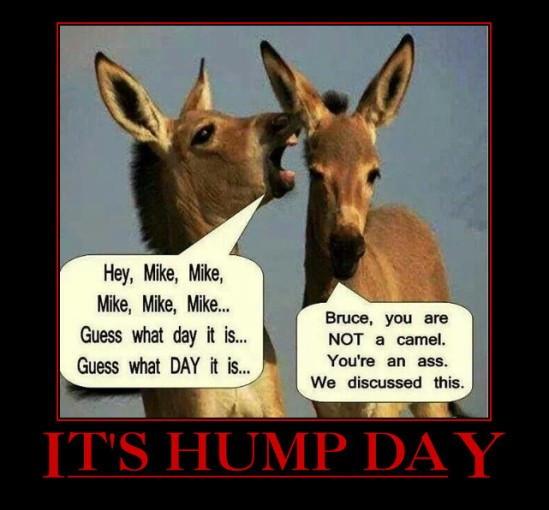 It's Hump Day