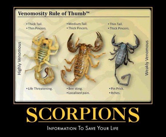 scorpionsinformation