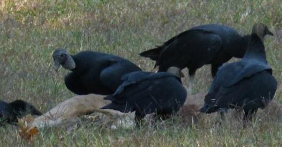0000 Vultures 2