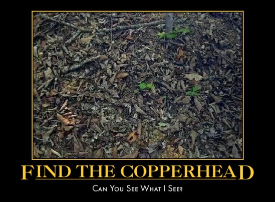 Find The Copperhead